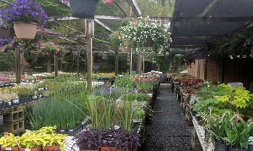 For Sale Nursery Plants, Annuals, and Perennials