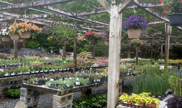 Flowering Hanging Baskets for Sale in Maryland near PA
