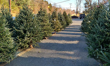 Live Christmas Trees for Sale Harford County MD