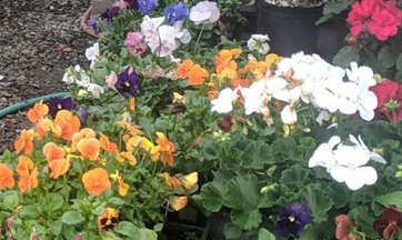 Flowering Plants for Sale Harford County MD Nursery
