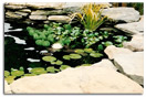 Pond Repair and Maintenance Services Harford County Maryland